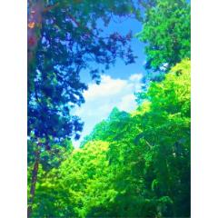 D 6 見上げ視点の森 空有り イラスト風 Clip Studio Assets
